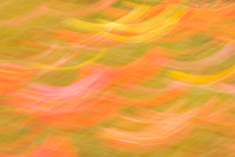 Really moving the camera during a long exposure totally blurs the subject and leaves one with an abstract picture of color.
