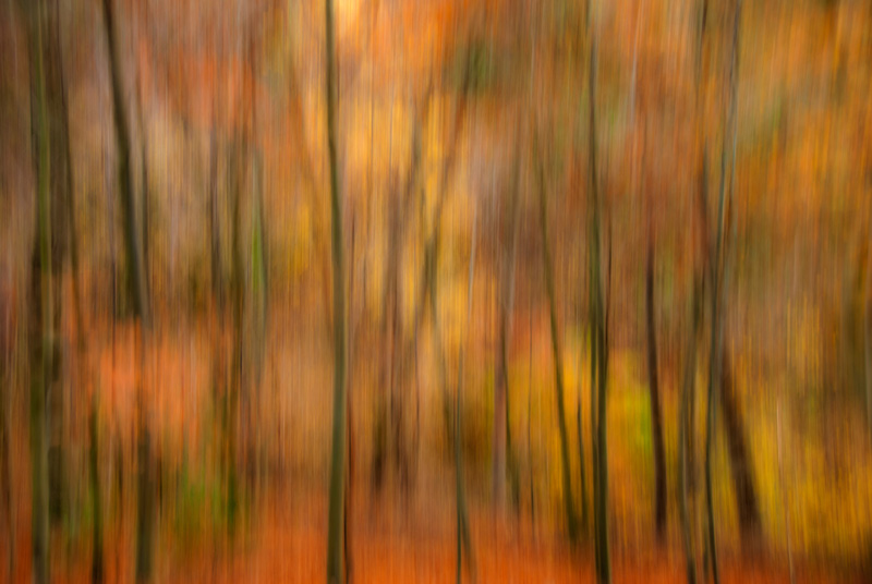 Moving the camera up and down during the exposure gives an impressionist look to this forest scene.