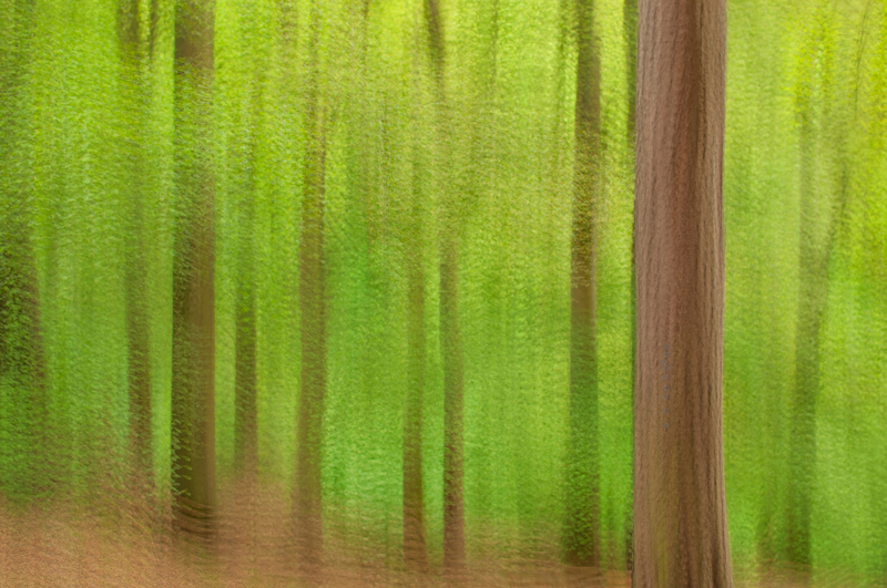 Multiple exposure photograph of spring forest in Blackford Hill Edinburgh
