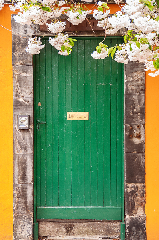 Green door against an orange wall in Musselburgh, with some flowers  hanging from the top of the photograph