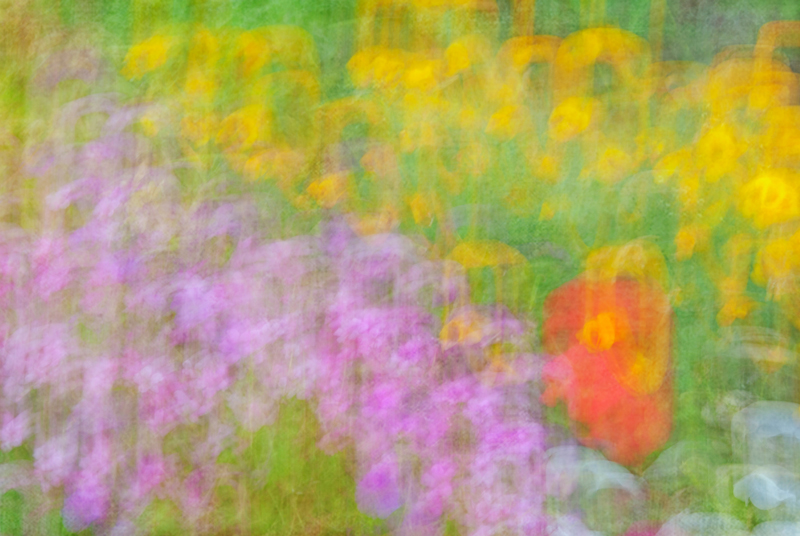 Colour abstract of flowers obtained by moving the camera during a long exposure, with a texture  blended into the photograph in Photoshop