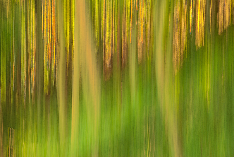 Panning impressionist photograph of summer forest