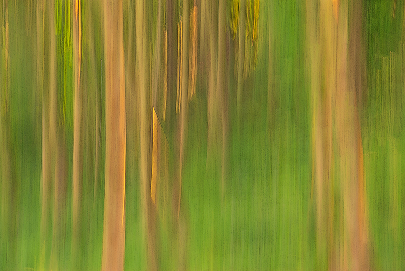 Panning impressionist photograph of  forest