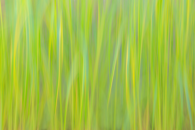 Abstract of plants, panning the camera up and down during a long exposure