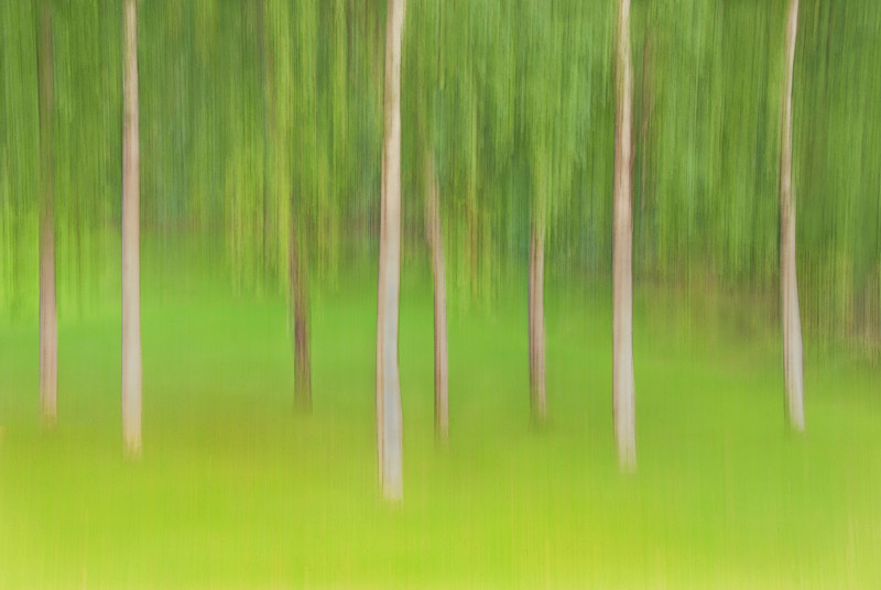 Pan during a long exposure of trees in Princes Street Gardens, Edinburgh