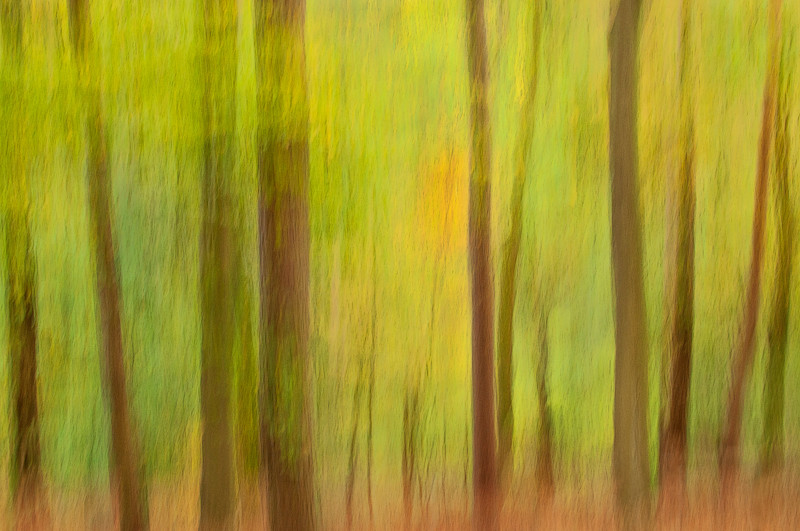 Panning picture of fall forest scene in Blackford Hill, Edinburgh, early fall