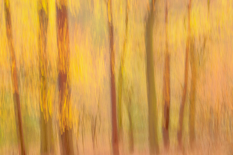 Panning picture of fall forest scene in Blackford Hill, Edinburgh, late fall