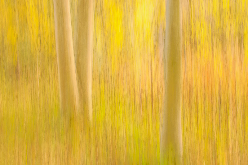 Panning photograph of three trees with fall colours, taken on Blackford Hill, Edinburgh