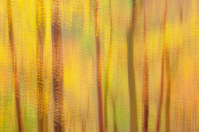Multiple exposures of fall forest in Blackford Hill, Edinburgh