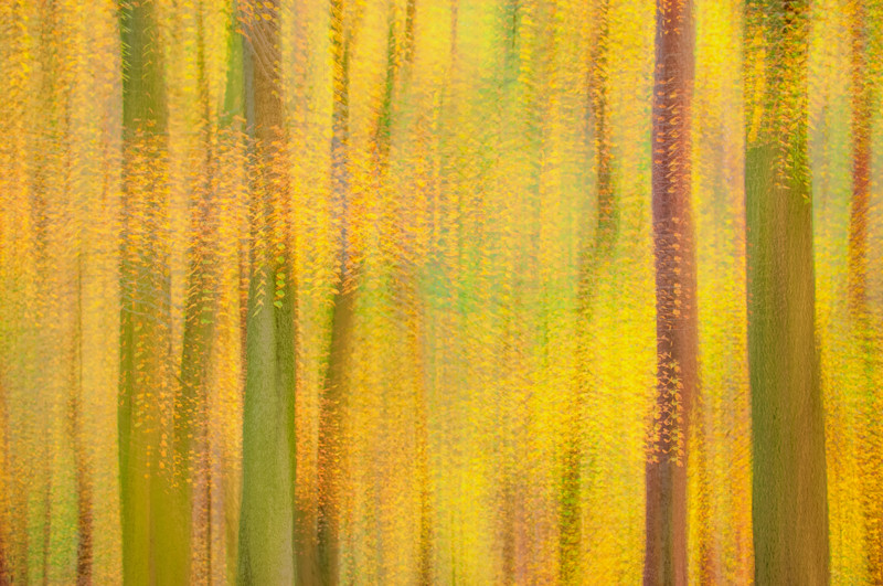 Multiple exposure photograph of the fall forest in Blackford Hill, Edinburgh.