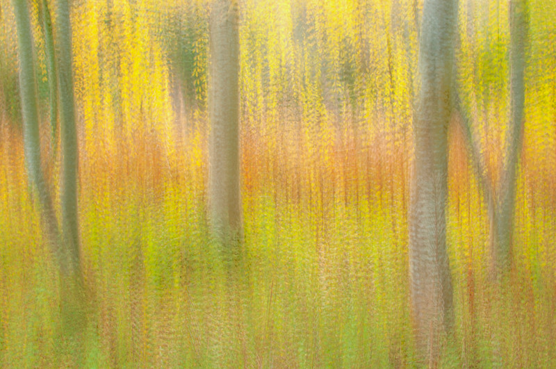 Multiple exposure photograph of the fall forest in Blackford Hill, Edinburgh