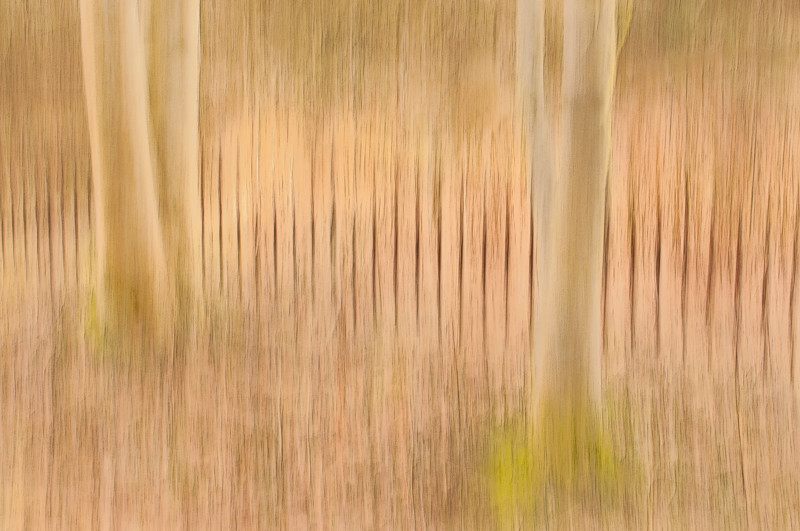 Impressionist photography using the panning technique in the forest of Blackford Hill, Edinburgh in the winter