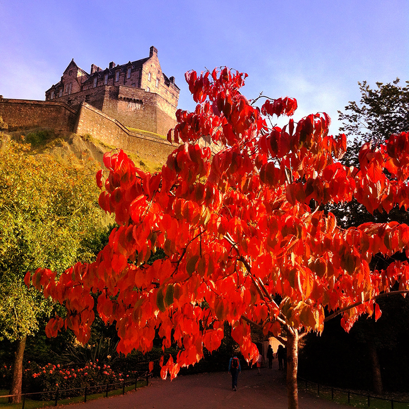 Edinburgh castle from Princes Street gardens with iPhone last autumn.