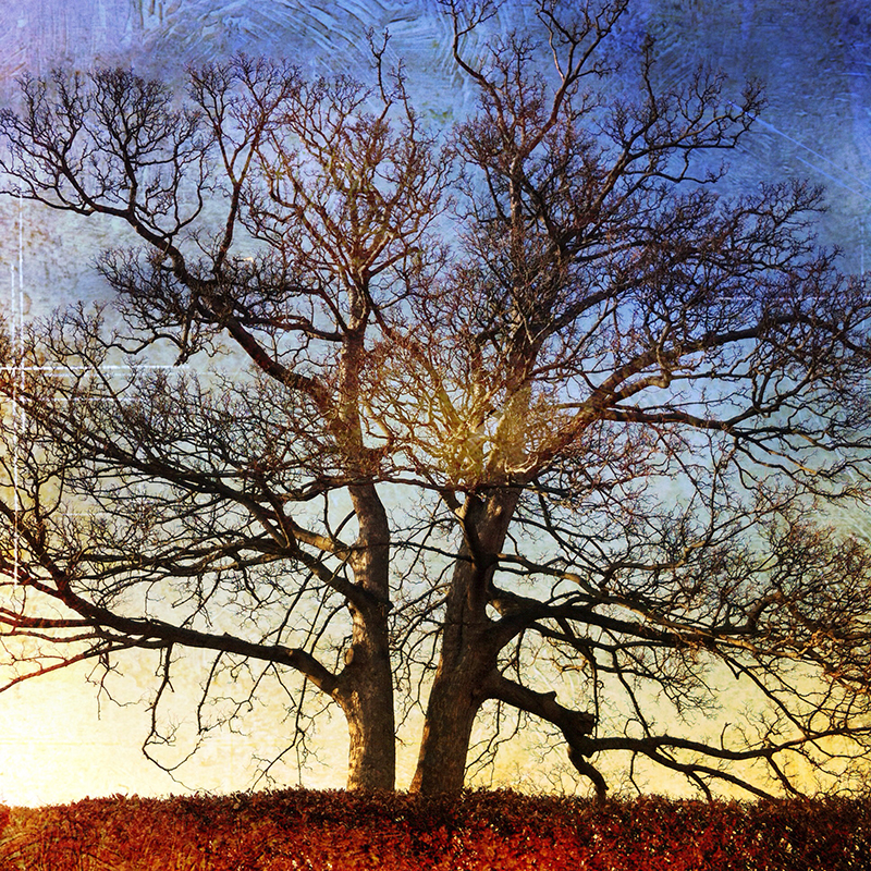 iPhone photograph of a lone tree in winter time edited with the DistressedFX app.