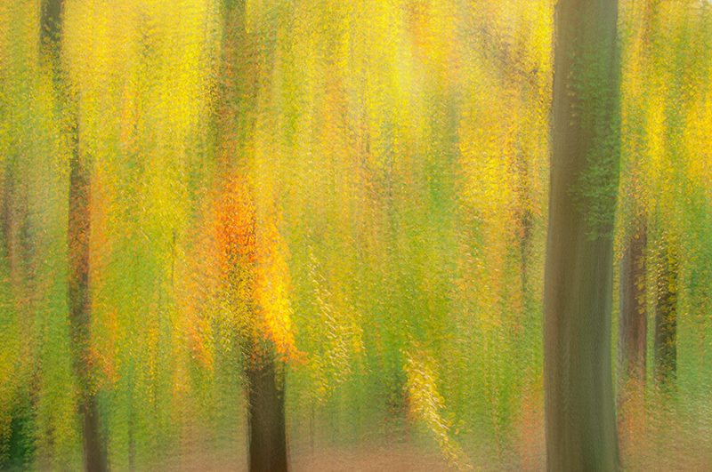 Multiple in camera exposures of a fall forest to create an impressionist photograph