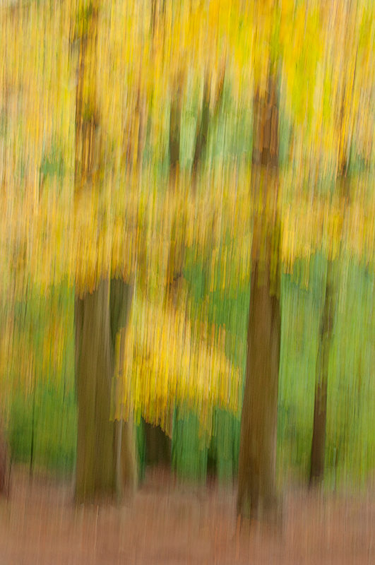 Panning the camera to create an impressionist photography of an autumn forest