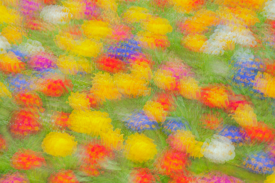 Colour abstract obtained with multiple exposures of a bed of spring flowers